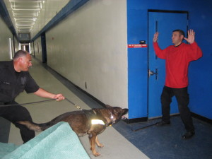 MDSPD K-9 Sergeant Reinaldo Perez conducts a training exercise of a building search with his K-9 partner Combat who locates and apprehend a burglary subject.